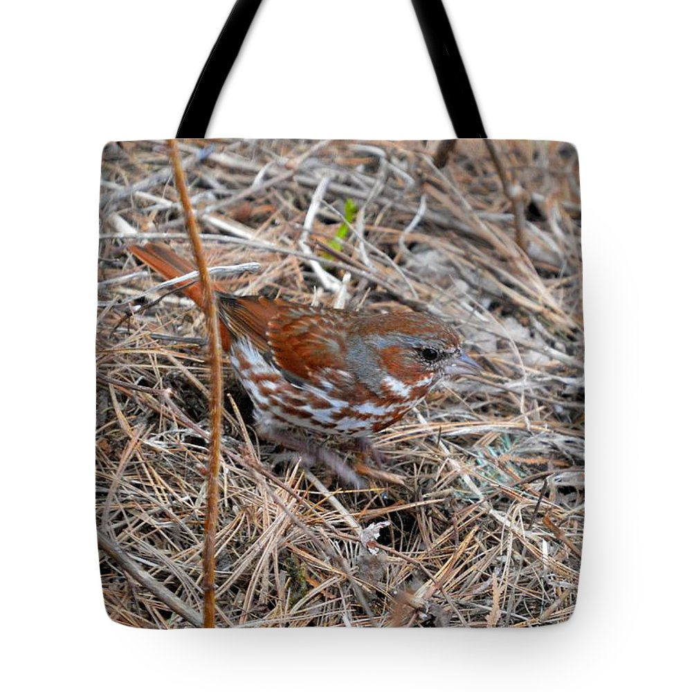Fox Sparrow Tote Bag featuring the photograph Fox Sparrow 2 by Thomas Phillips