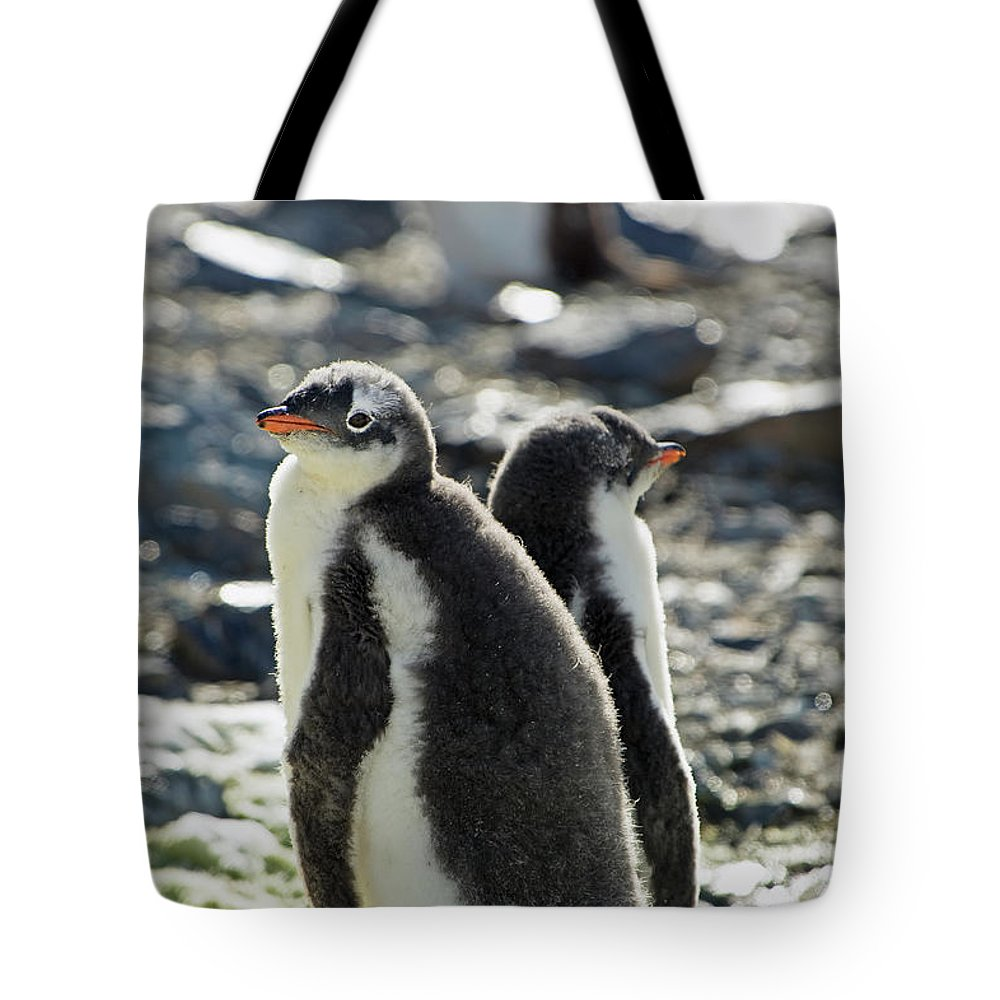 Alertness Tote Bag featuring the photograph Gentoo Penguins Pygoscelis Papua by Jim Julien / Design Pics