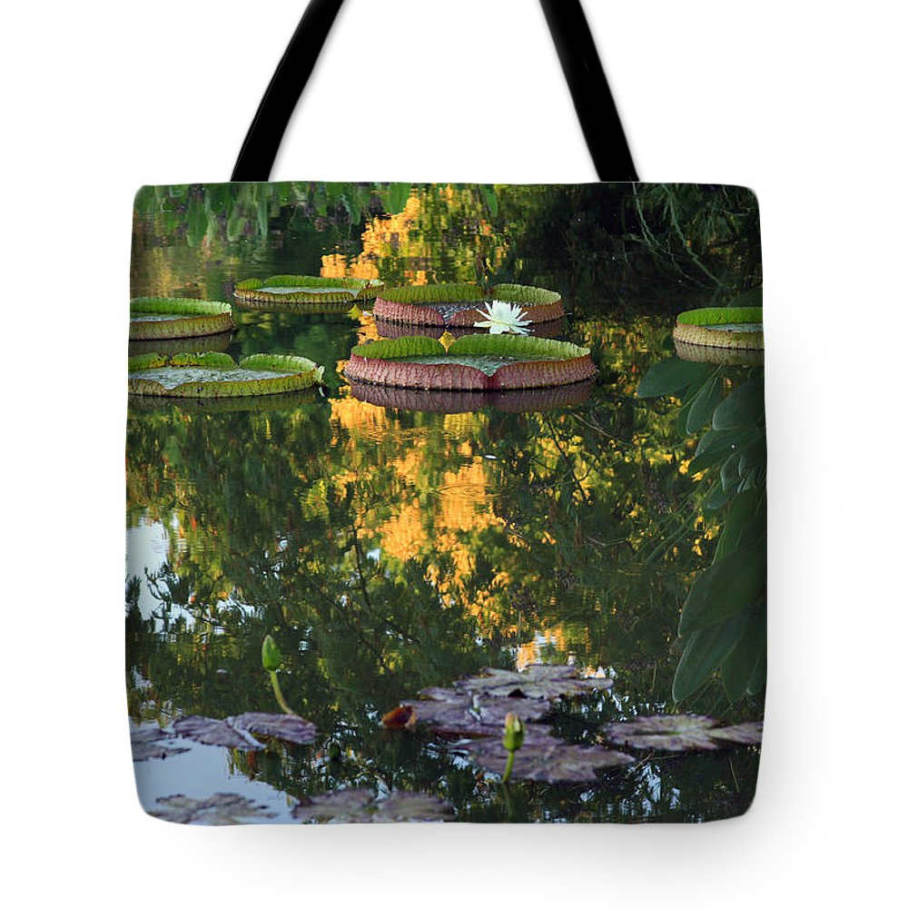 Water Lily Tote Bag featuring the photograph Gold Reflections by John Lautermilch