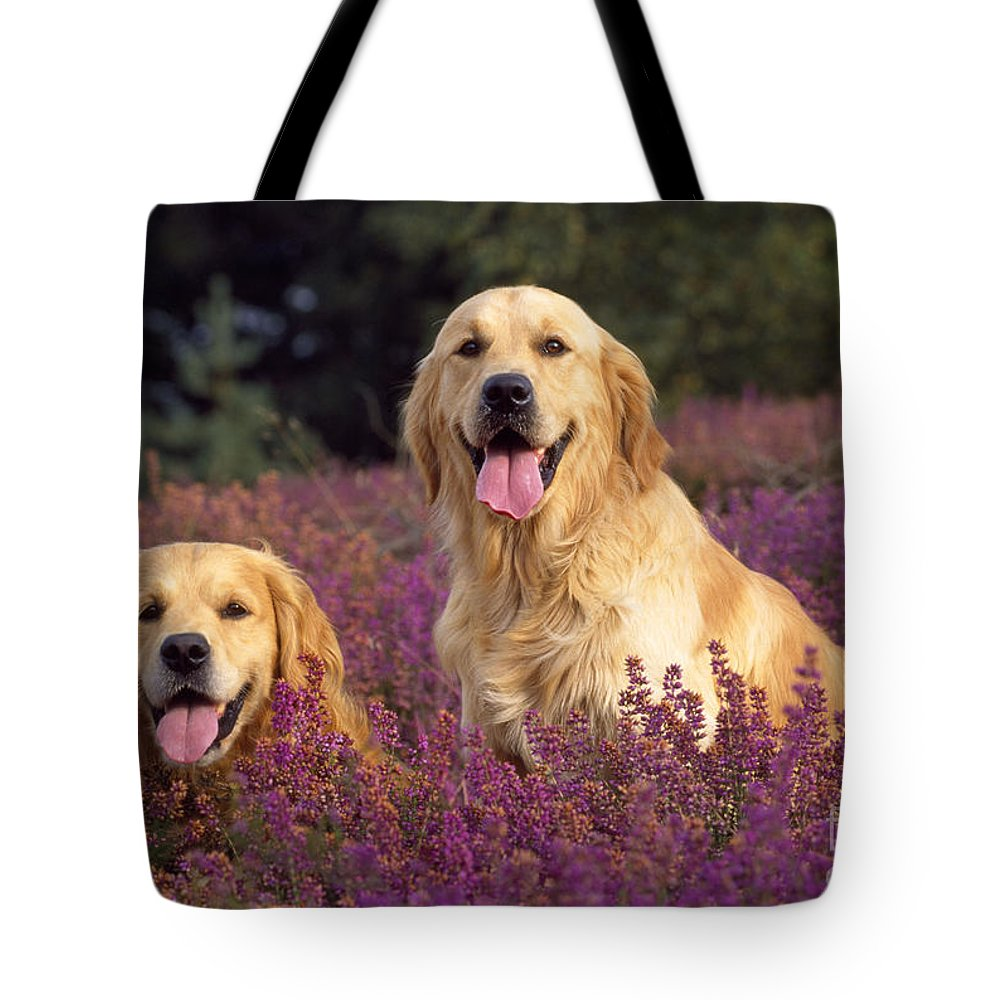 Golden Retriever Tote Bag featuring the photograph Golden Retriever Dogs In Heather by John Daniels