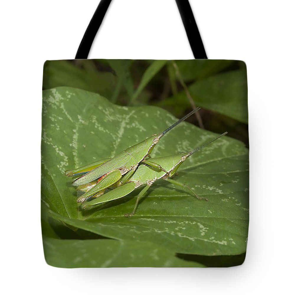 Grasshopper Tote Bag featuring the photograph Grasshopper Mating On Grass Leaf by Rudra Narayan Mitra