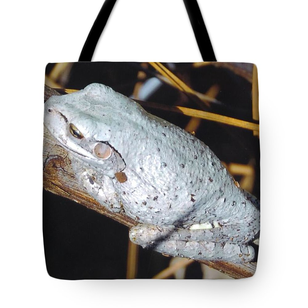 Riding A Branch Tote Bag featuring the photograph Gray Treefrog by Robert Floyd