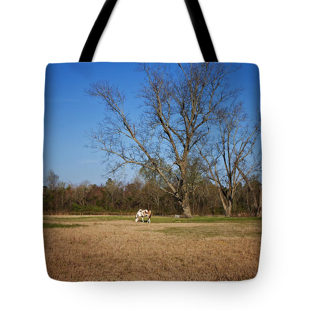 Tree Tote Bag featuring the photograph Grazing by Kim Hojnacki