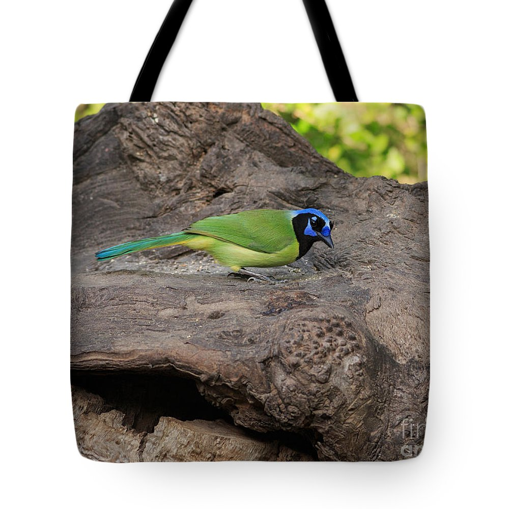 Green Jay Tote Bag featuring the photograph Green Jay by Louise Heusinkveld