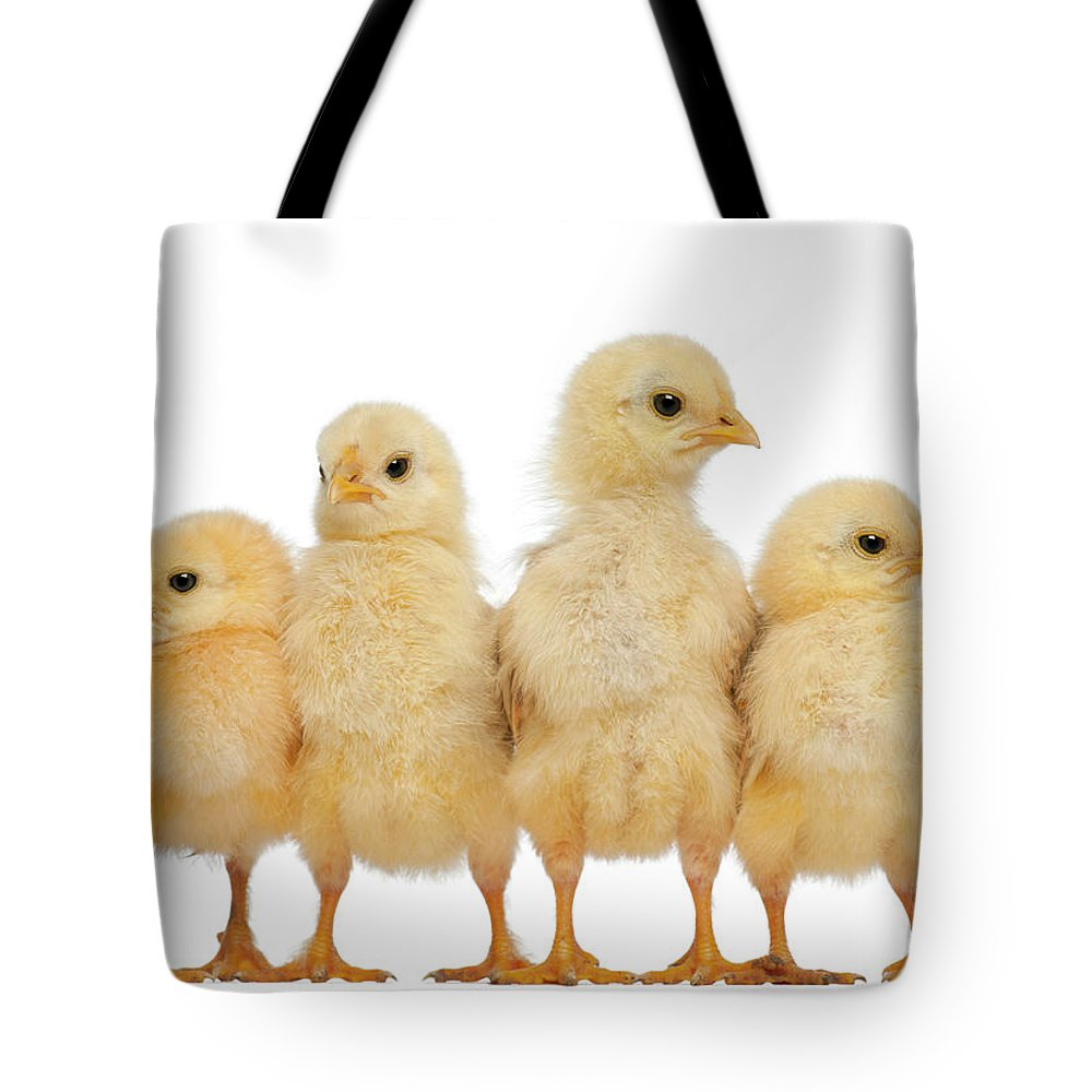 Belgium Tote Bag featuring the photograph Group Of Chicks by Life On White