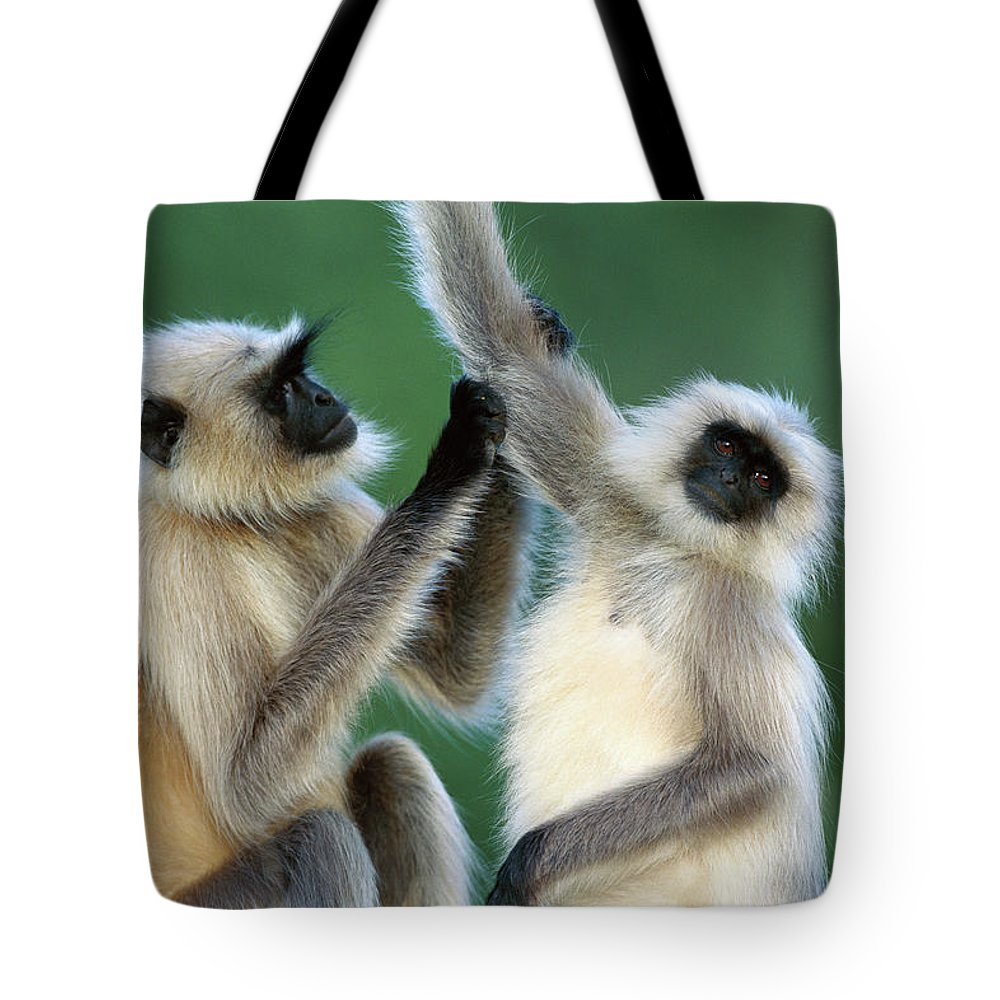 Jh Tote Bag featuring the photograph Hanuman Langurs Grooming India by Cyril Ruoso
