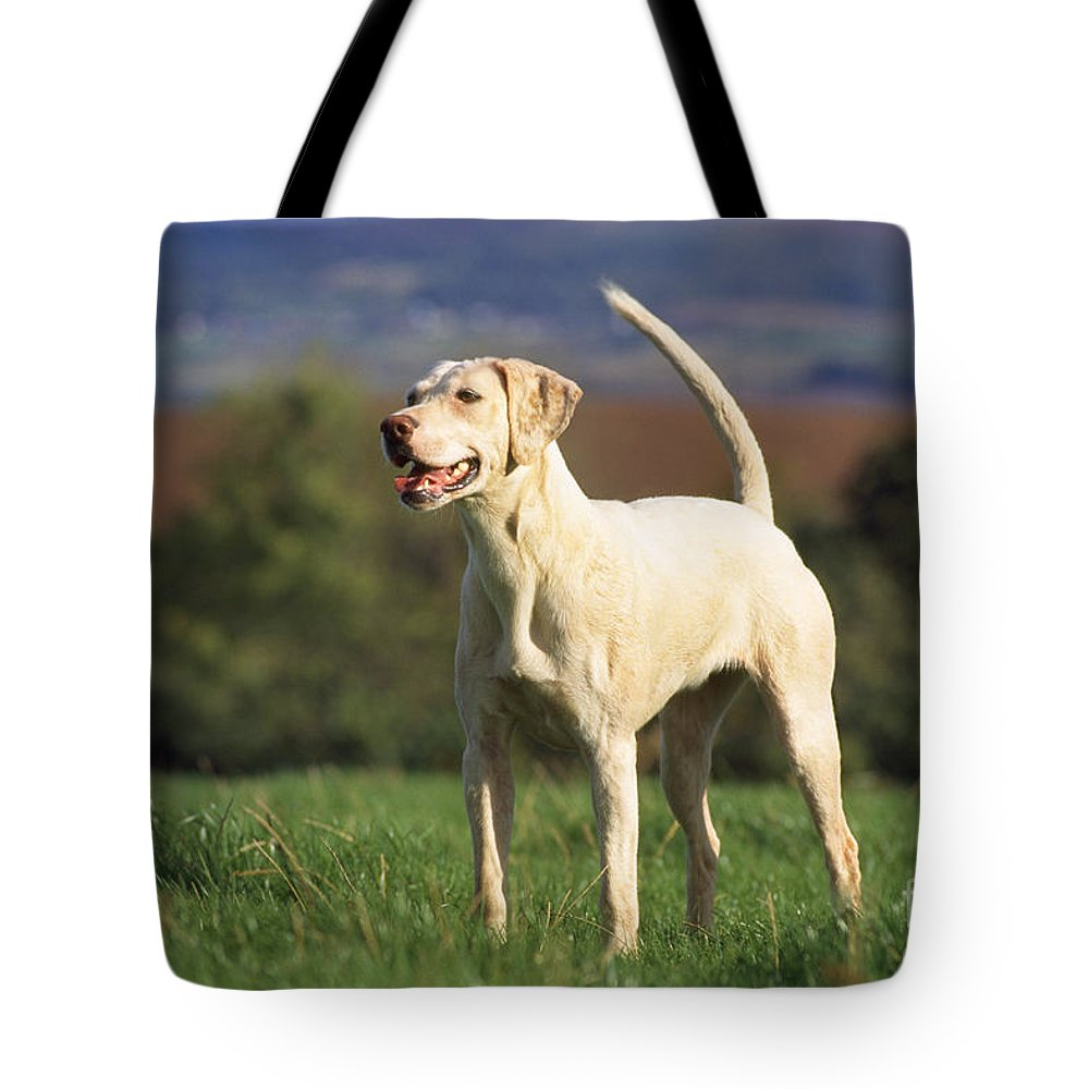 Harrier Tote Bag featuring the photograph Harrier Dog by John Daniels