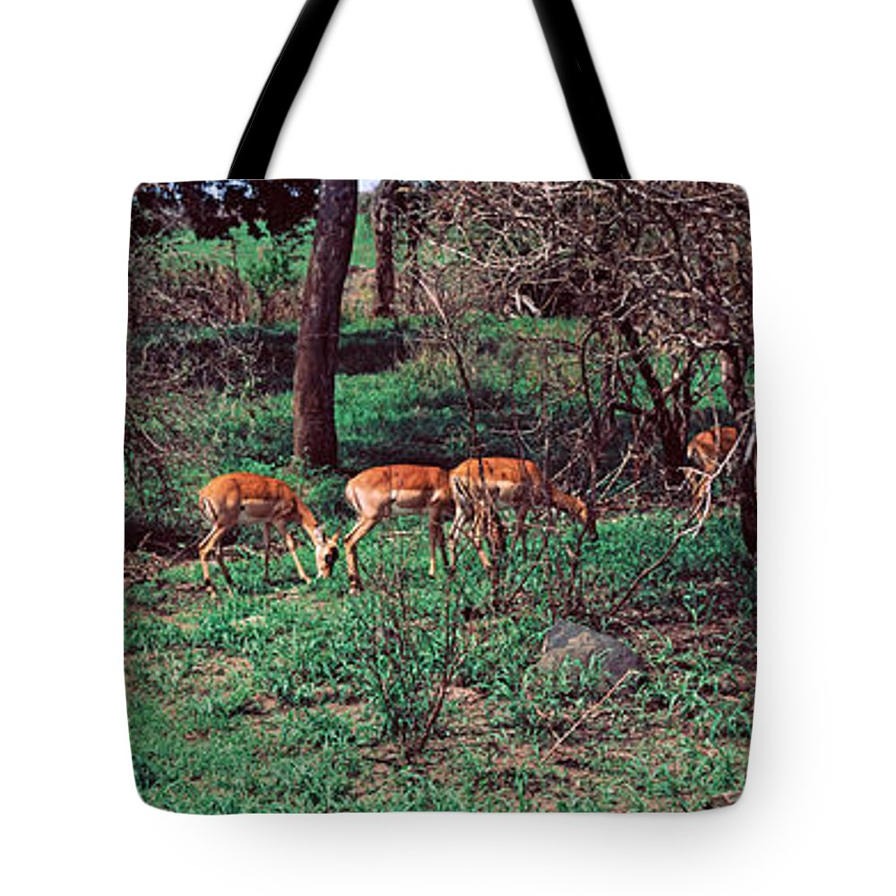 Photography Tote Bag featuring the photograph Herd Of Impalas Aepyceros Melampus by Panoramic Images