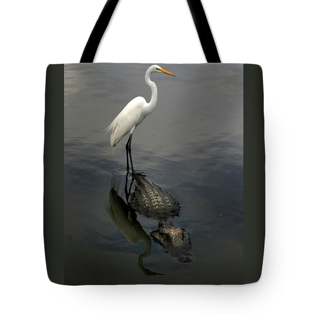 Alligator Tote Bag featuring the photograph Hitch Hiker by Anthony Jones