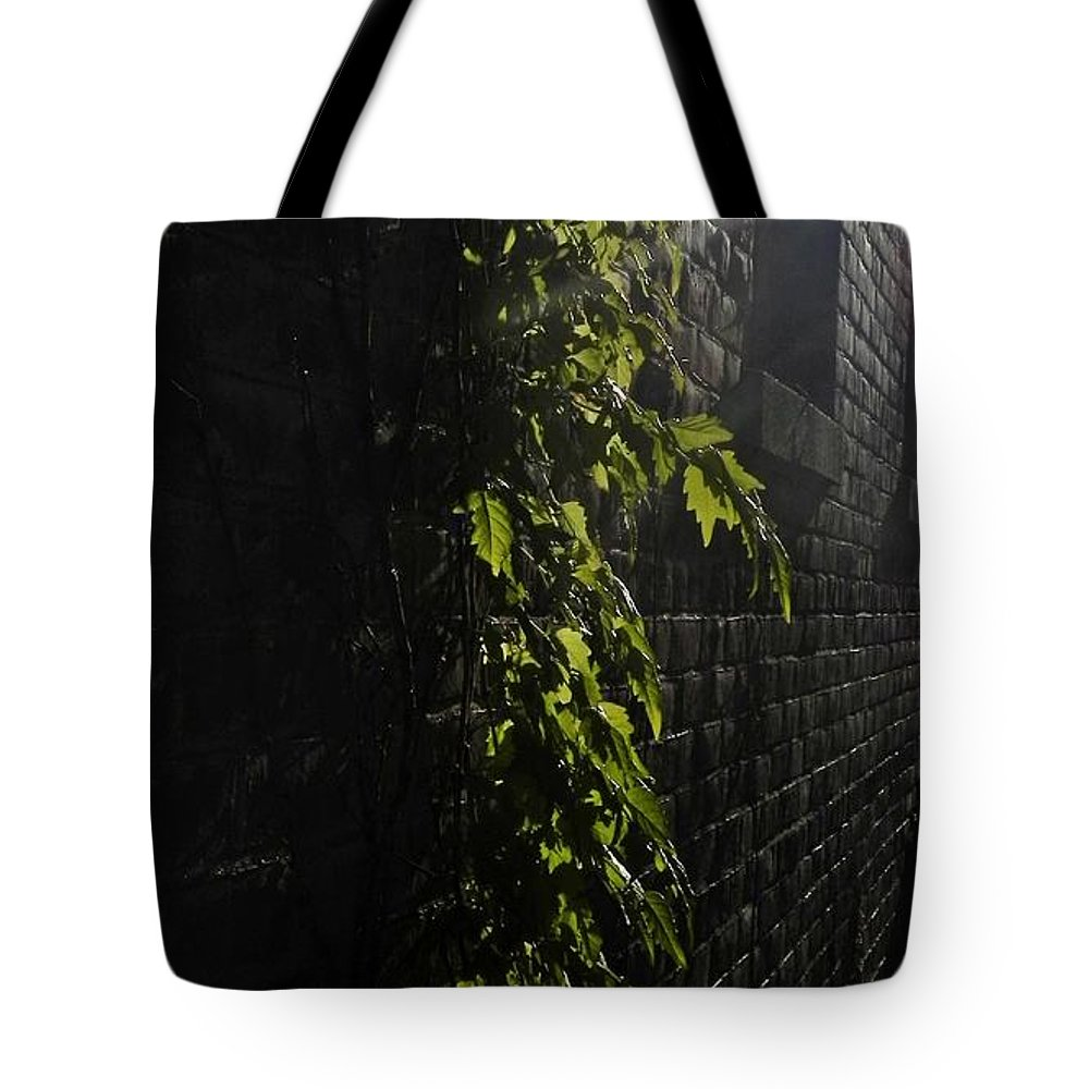 Foliage Tote Bag featuring the photograph Ivy League by Debbie Summers