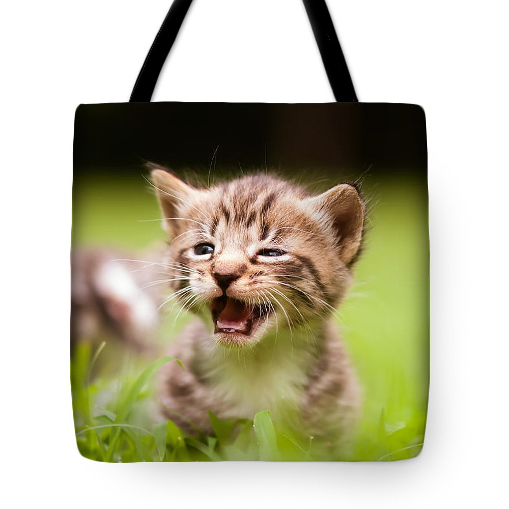 Animal Tote Bag featuring the photograph Kitty In Grass by Alex Grichenko