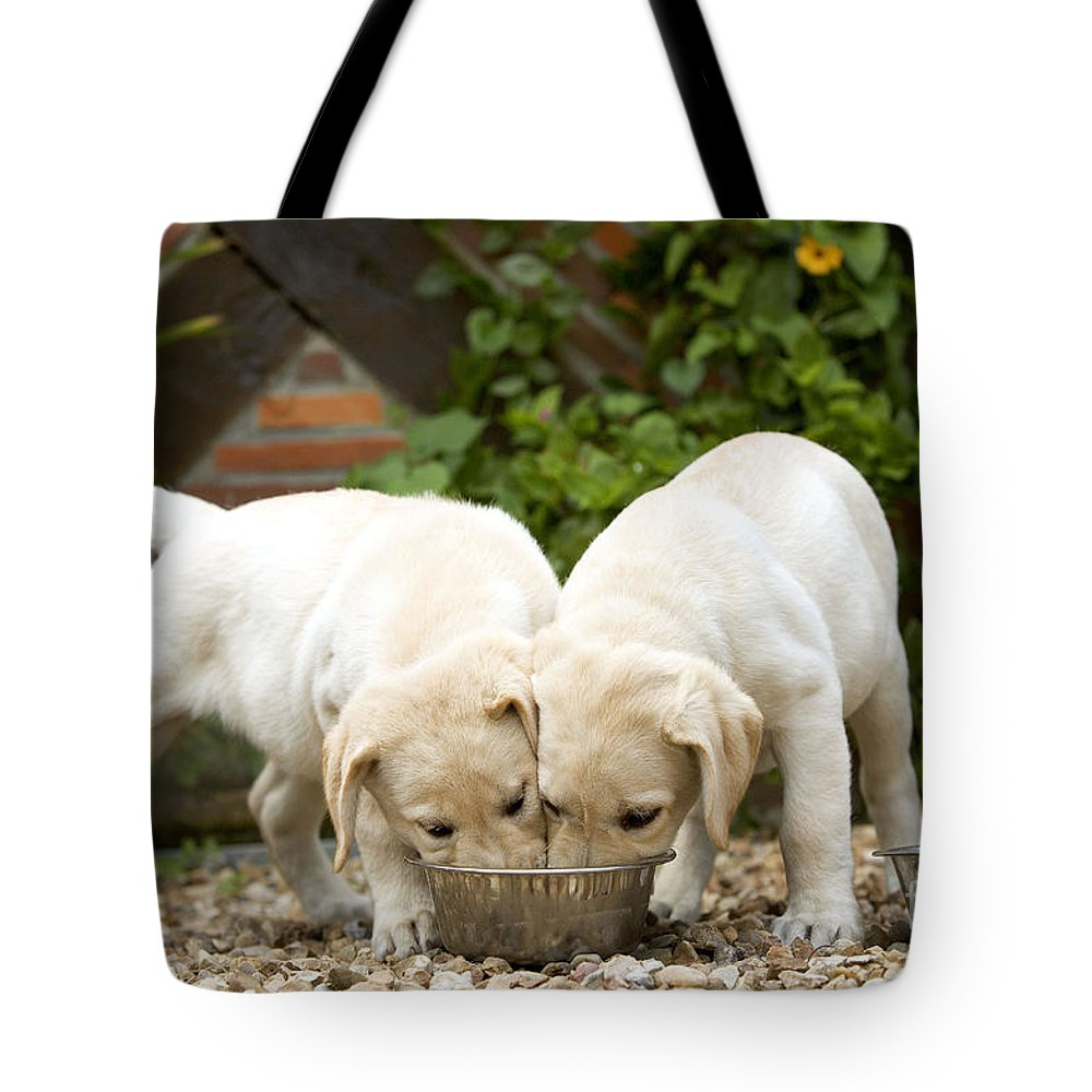 Labrador Retriever Tote Bag featuring the photograph Labrador Puppies Eating by Jean-Michel Labat