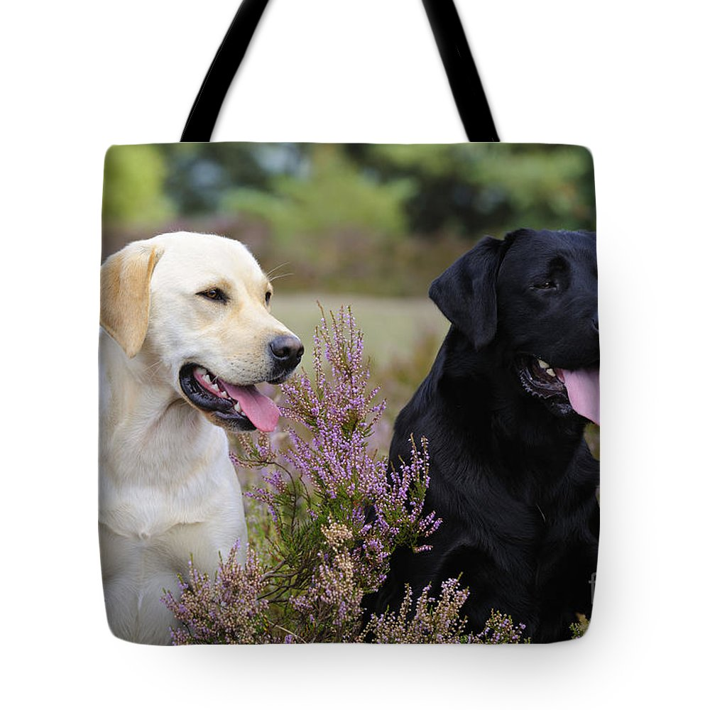 Labrador Retriever Tote Bag featuring the photograph Labrador Retriever Dogs by John Daniels