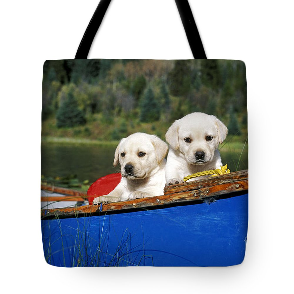 Labrador Retriever Tote Bag featuring the photograph Labrador Retriever Puppies by Rolf Kopfle