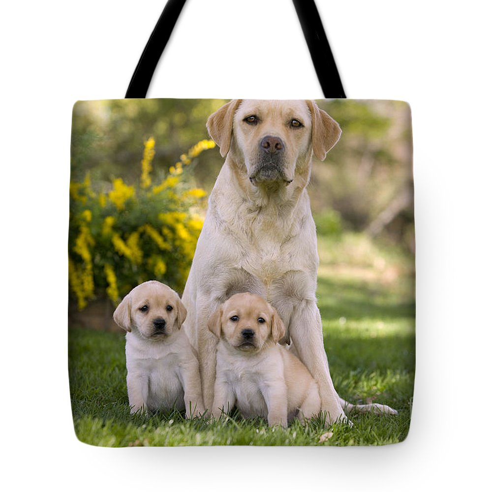Labrador Retriever Tote Bag featuring the photograph Labrador With Two Puppies by Jean-Michel Labat