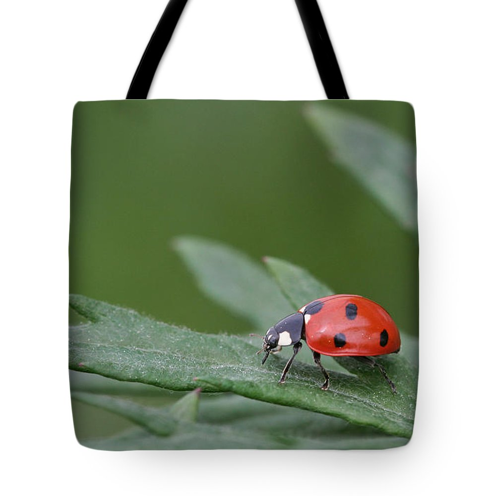 Lady Bird Tote Bag featuring the photograph Lady Bird by Dreamland Media