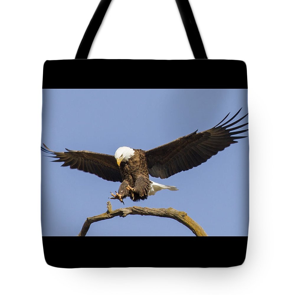 Eagle Tote Bag featuring the photograph Landing Approach 2 by David Lester