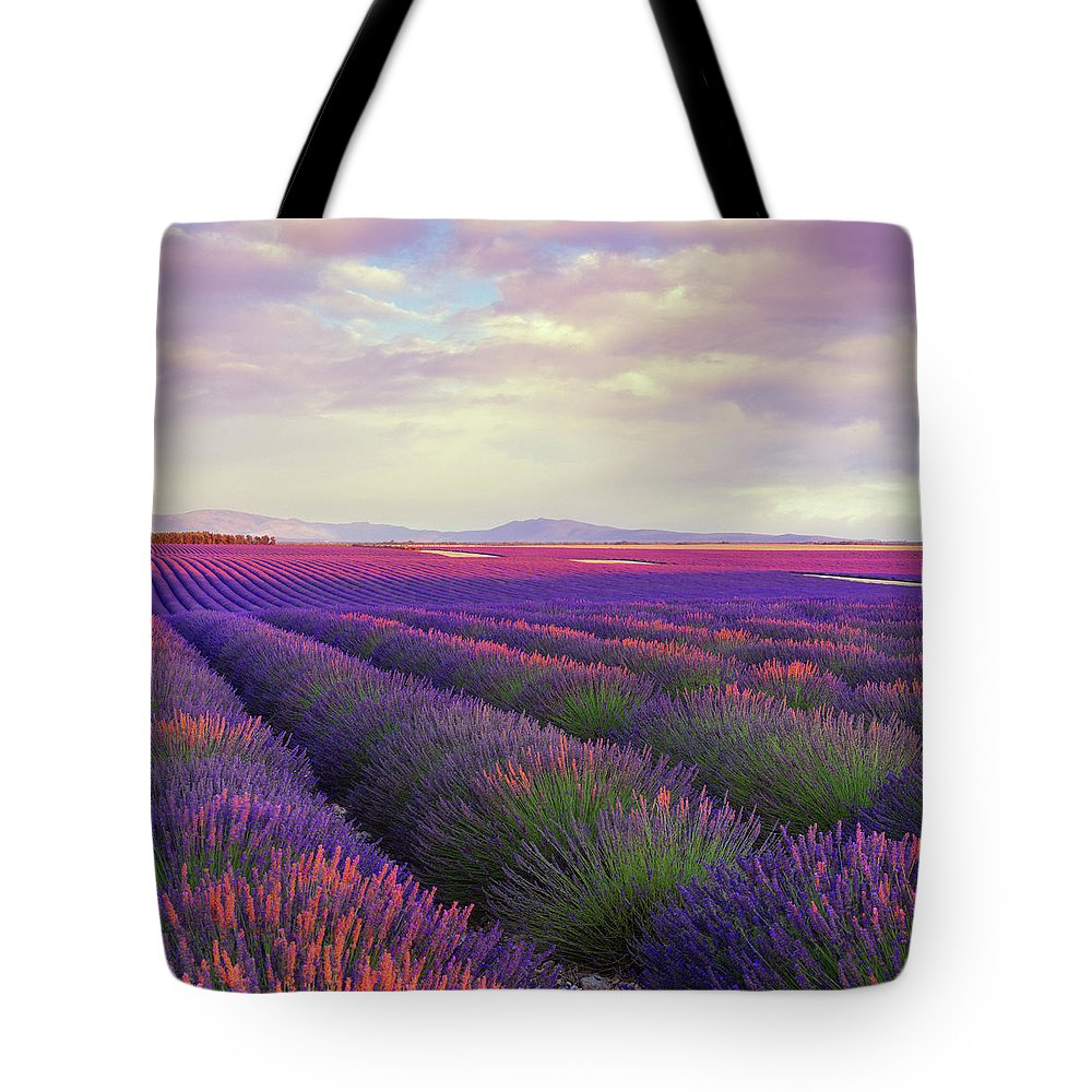 Dawn Tote Bag featuring the photograph Lavender Field At Dusk by Mammuth
