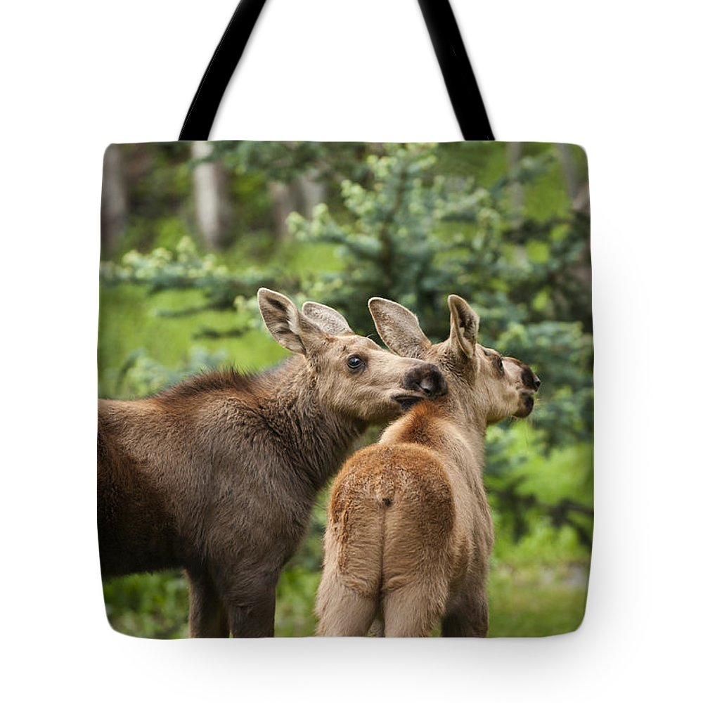Moose Tote Bag featuring the photograph Lean On Me by Ted Raynor