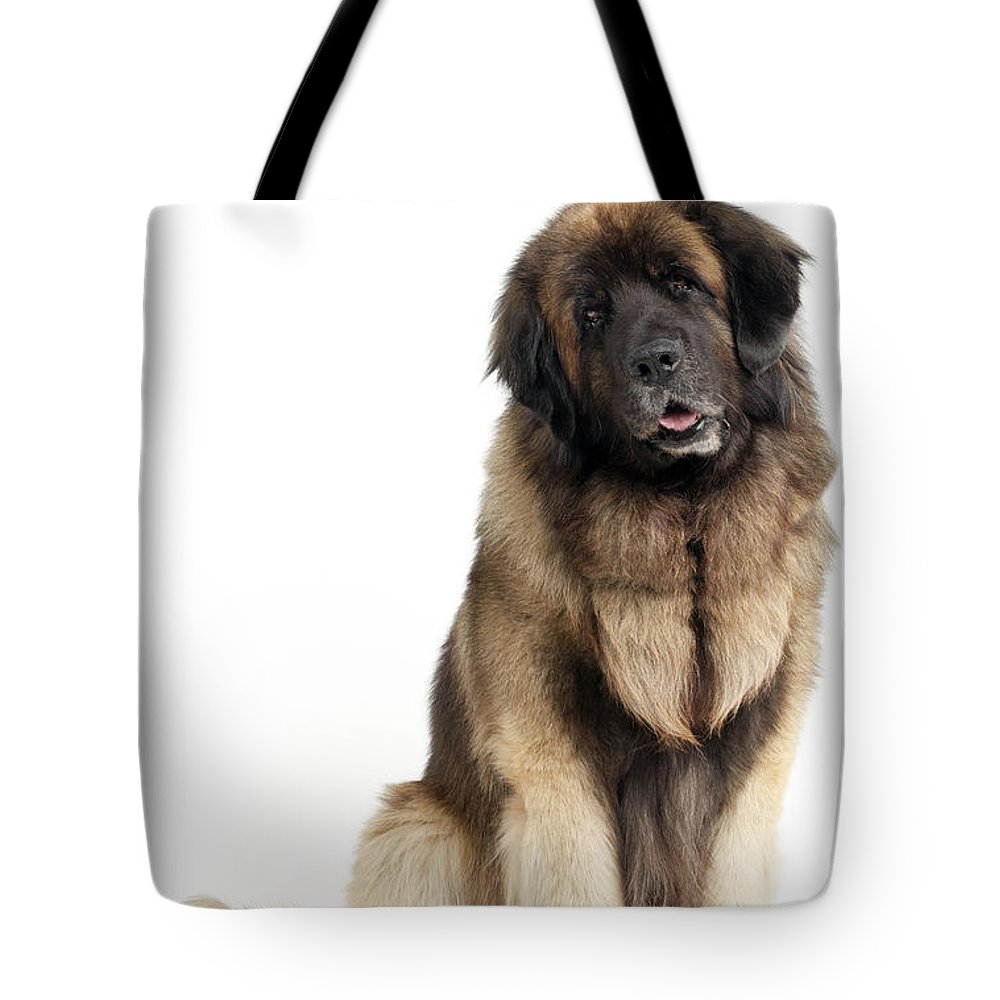 Leonberger Tote Bag featuring the photograph Leonberger Dog by Jean-Michel Labat
