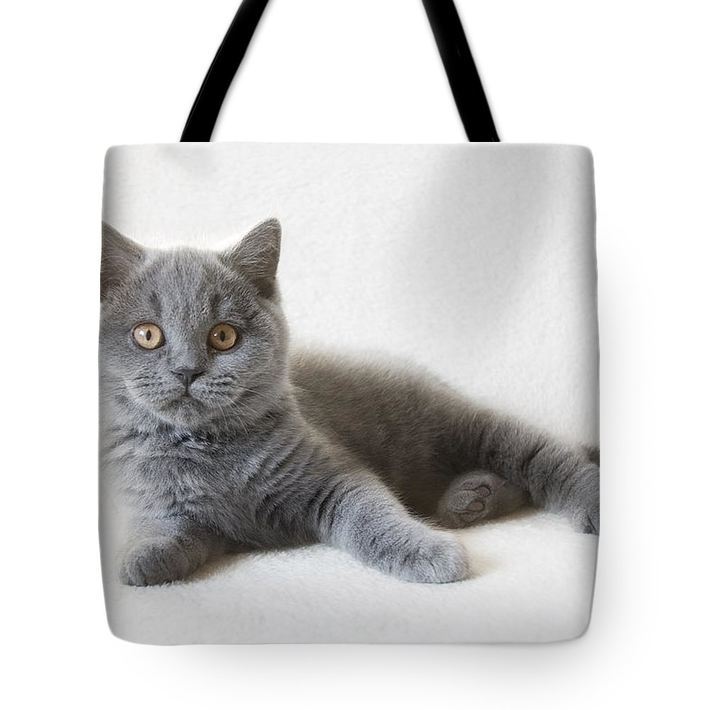 Katze Tote Bag featuring the pyrography Little Friend by Steffen Gierok
