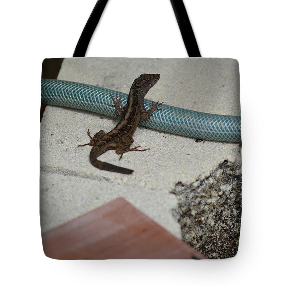 Florida Tote Bag featuring the photograph Lizard by Linda Kerkau
