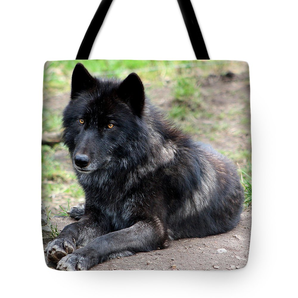 Wolf Tote Bag featuring the photograph Lone Wolf by Nick Gustafson