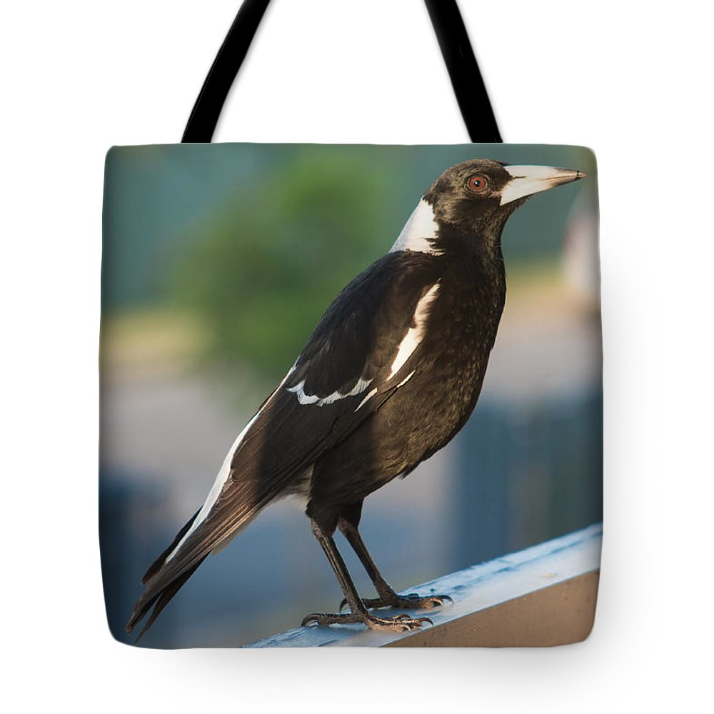 Magpie Tote Bag featuring the photograph Magpie by Michael Podesta