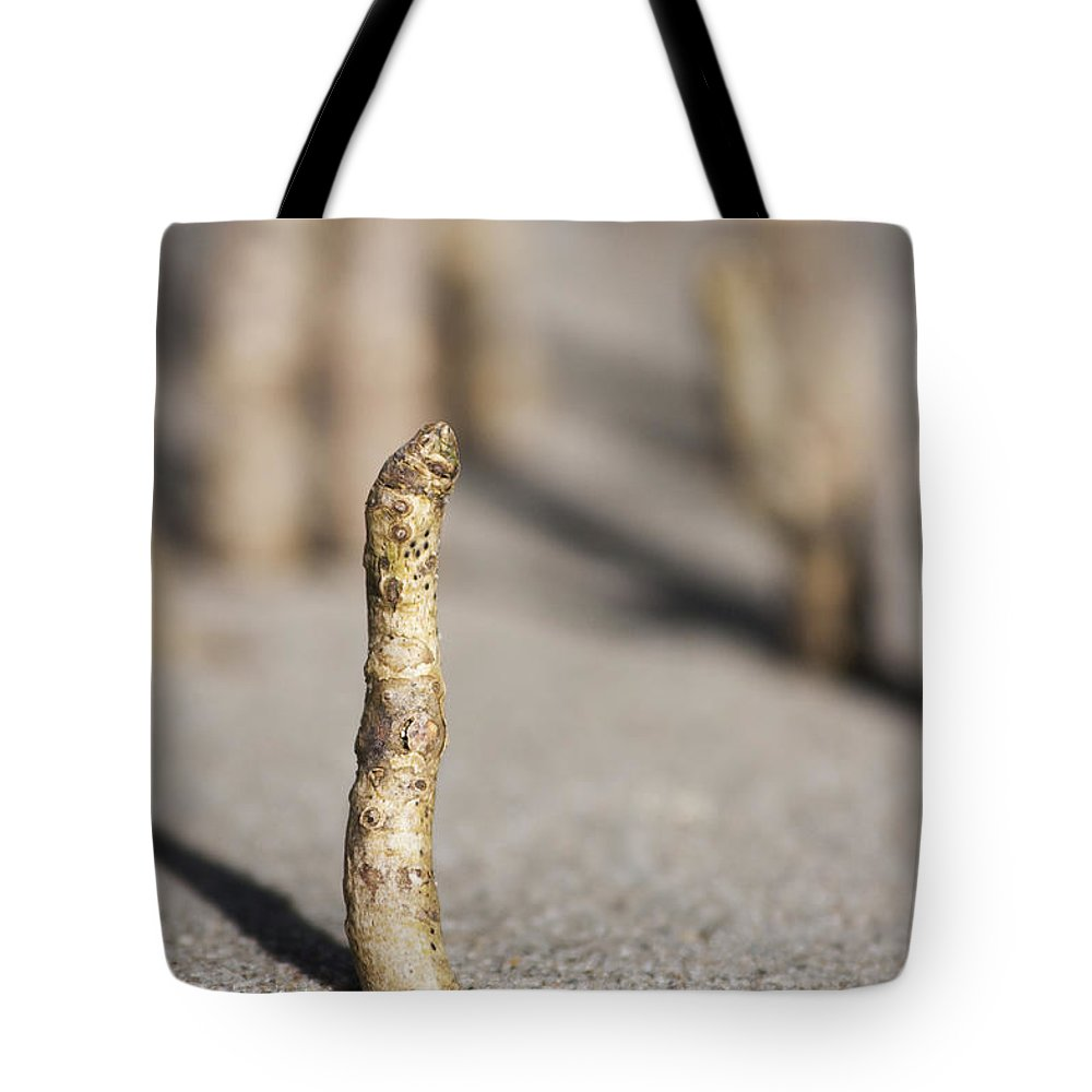 Beach Tote Bag featuring the photograph Mangrove Shoot by Jorgo Photography - Wall Art Gallery
