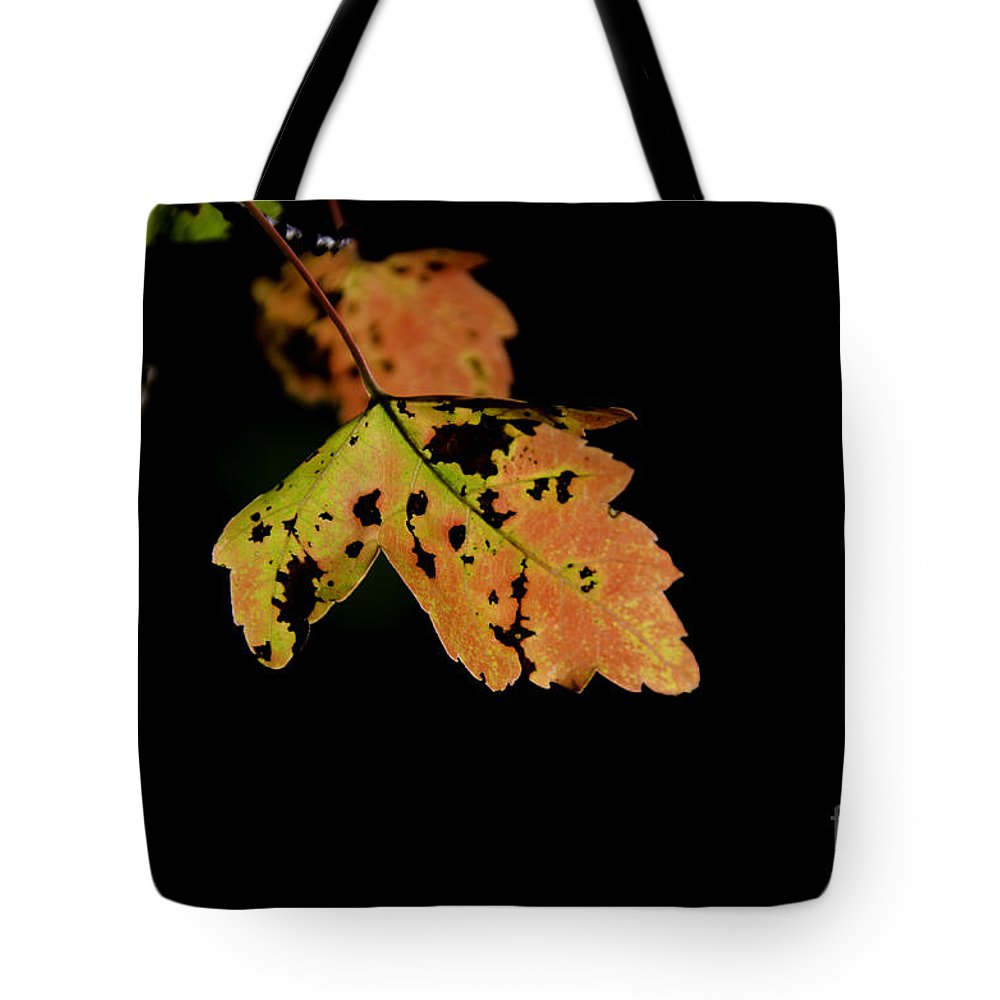 Maple Leaf Tote Bag featuring the photograph Maple Leaf by Dale Powell