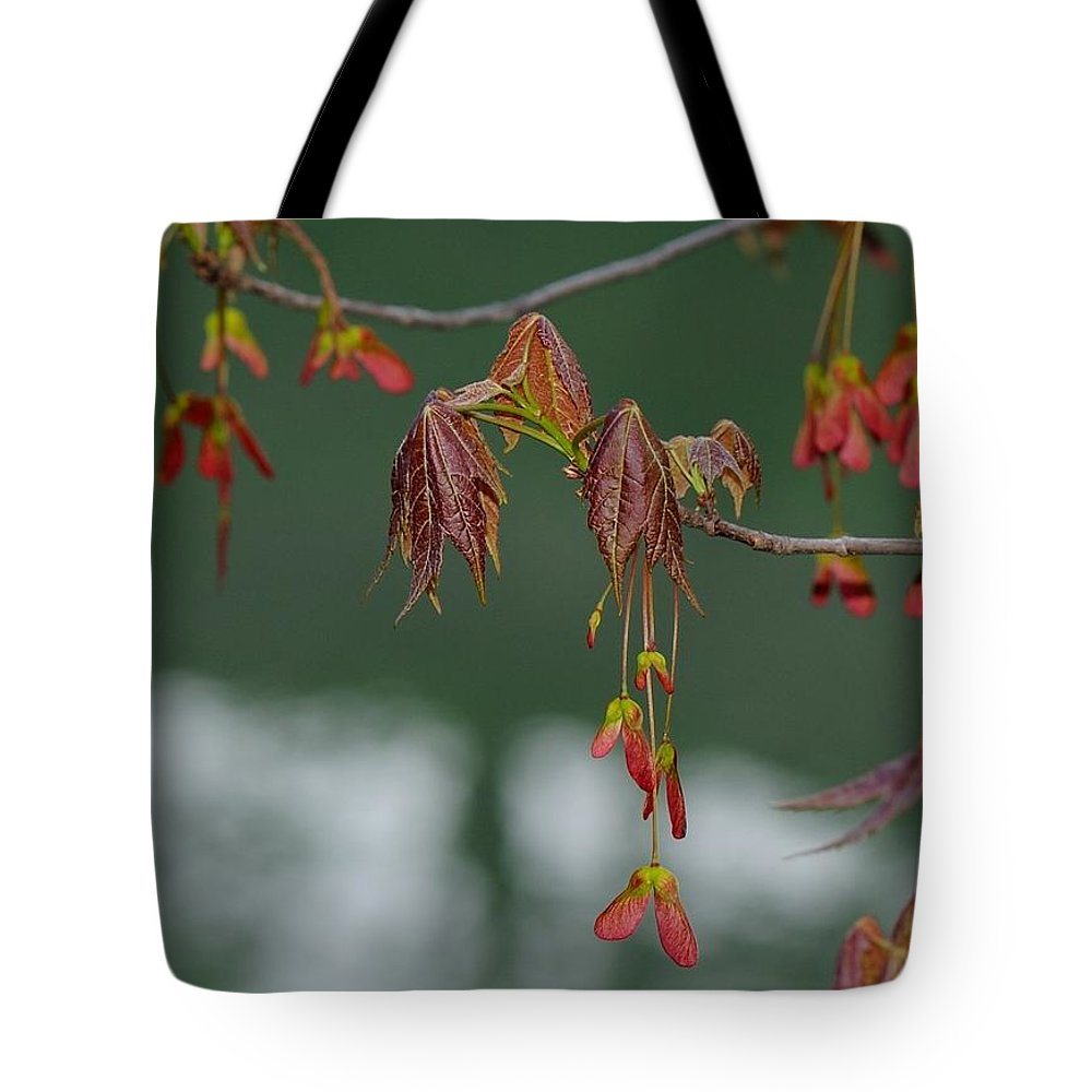 Japanese Maple Tote Bag featuring the photograph Maple Red Samaras by Ian Ashbaugh