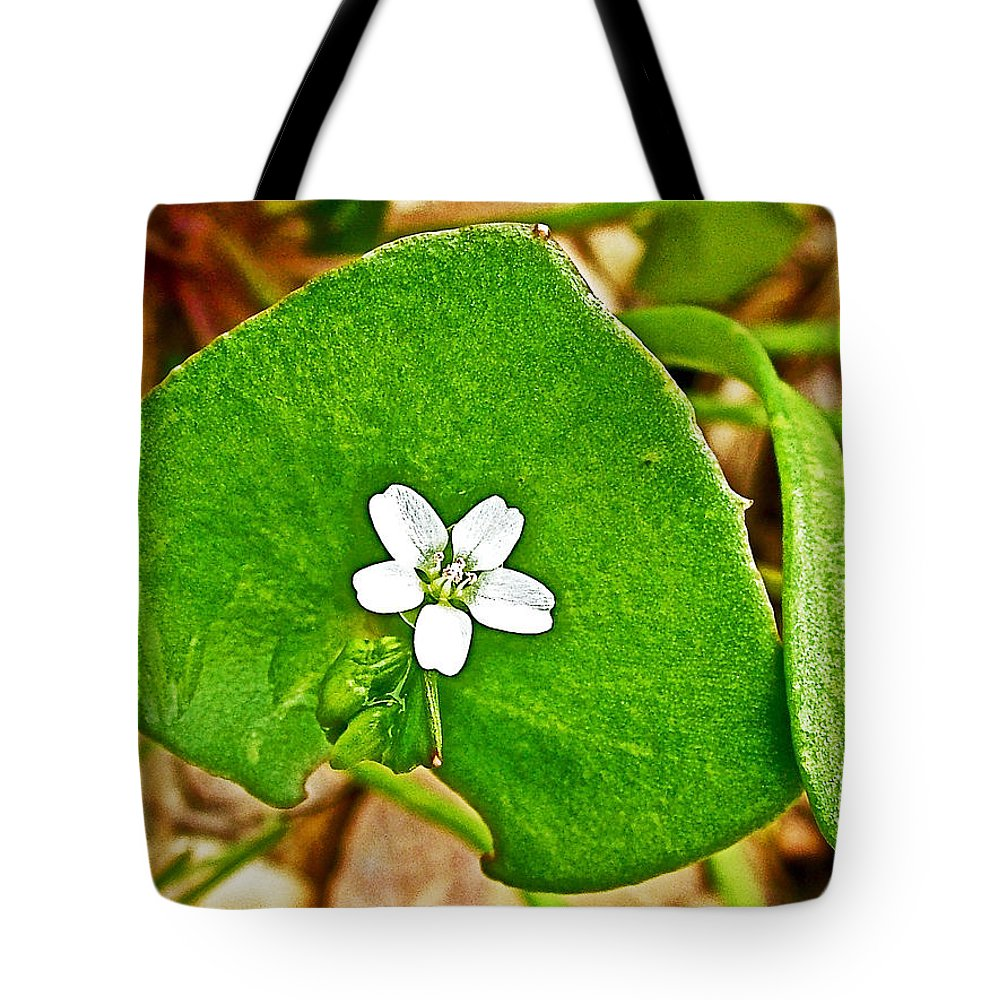 Miner's Lettuce In Park Sierra Near Coarsegold Tote Bag featuring the photograph Miner's Lettuce In Park Sierra Near Coarsegold-california by Ruth Hager