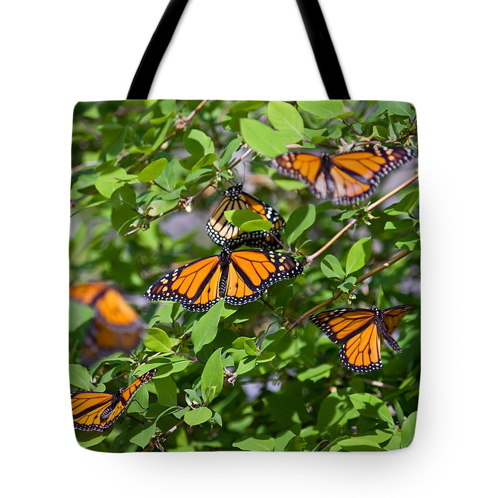 Monarch Butterfly Tote Bag featuring the photograph Monarch Butterflies by Melinda Fawver