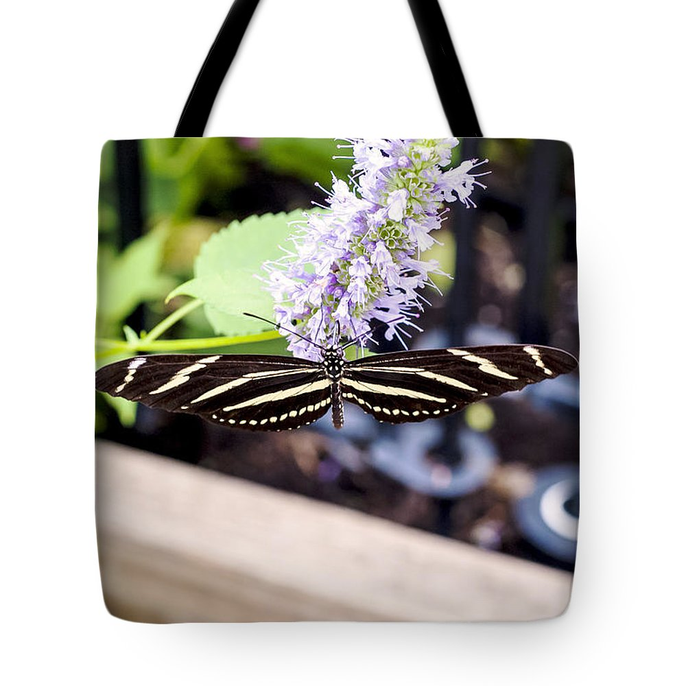 Nj Tote Bag featuring the photograph Zebra IIi by Pablo Rosales