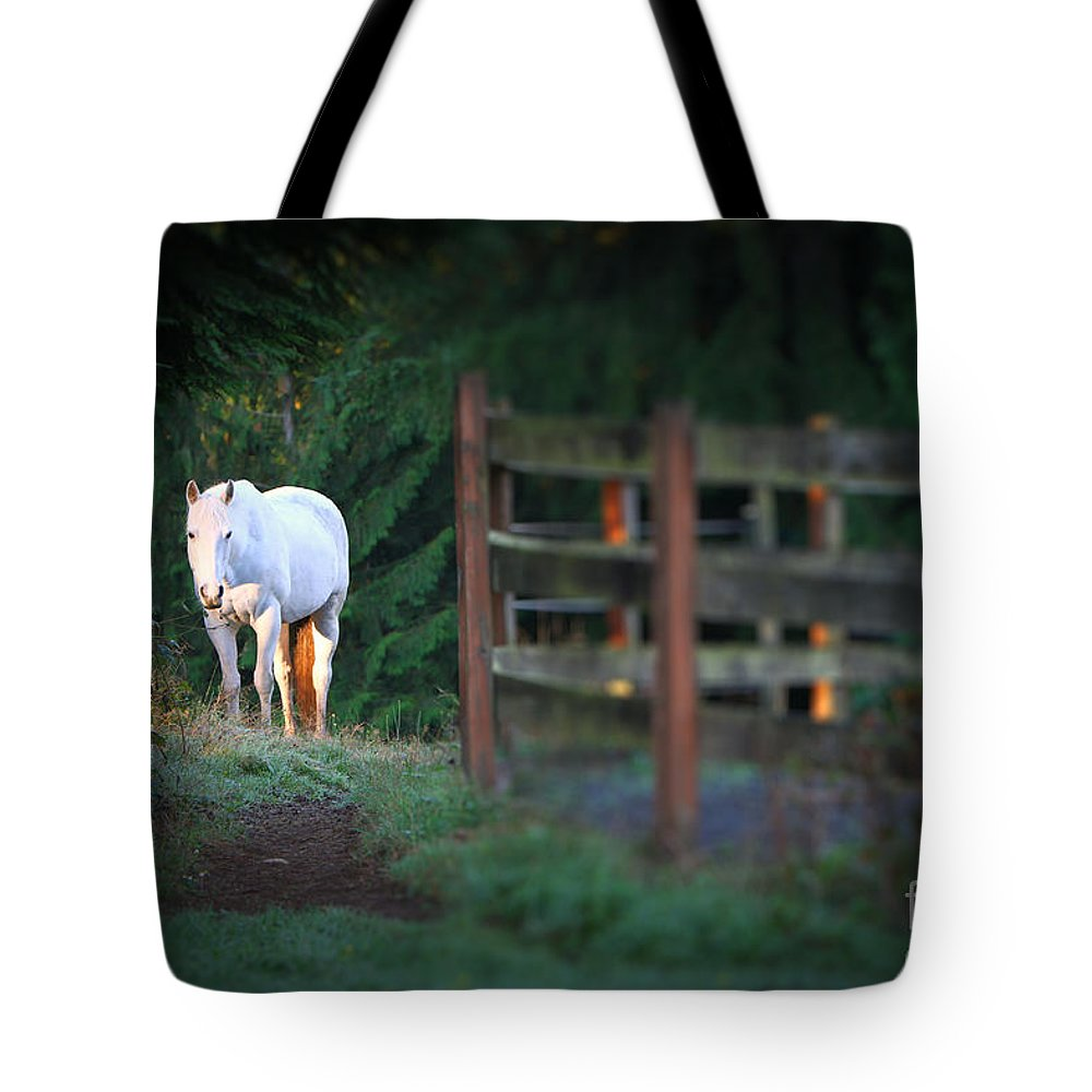 Illuminating Tote Bag featuring the photograph Self Assurance by Michelle Twohig