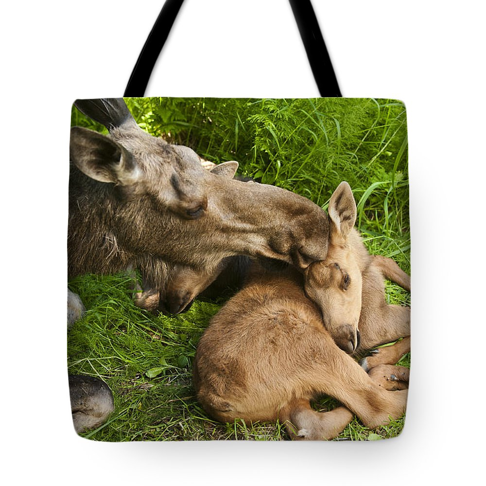 Moose Tote Bag featuring the photograph Motherly Love by Ted Raynor