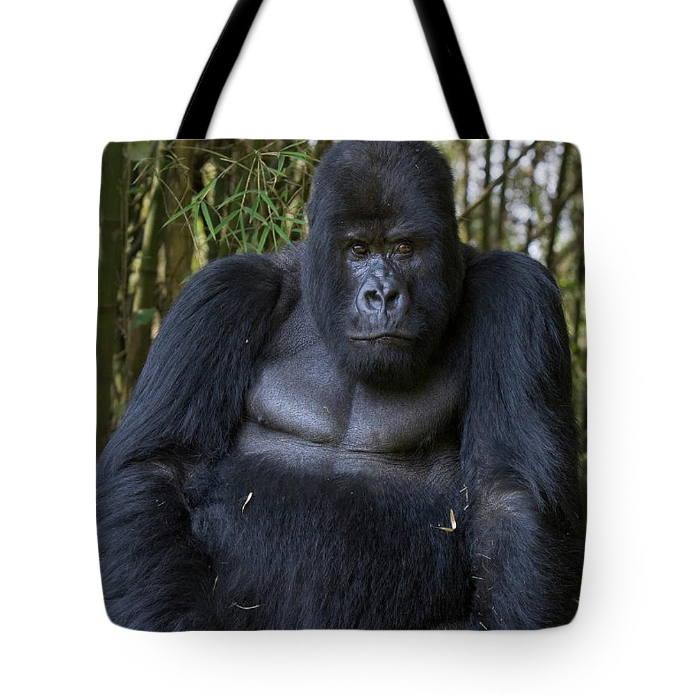 Mp Tote Bag featuring the photograph Mountain Gorilla Silverback by Suzi Eszterhas
