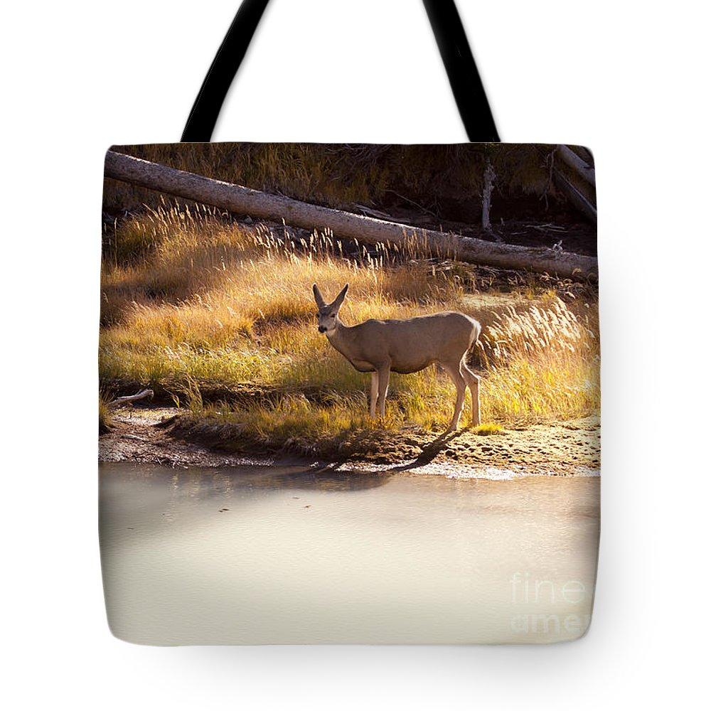 Deer Tote Bag featuring the photograph Mule Deer  #3942 by J L Woody Wooden