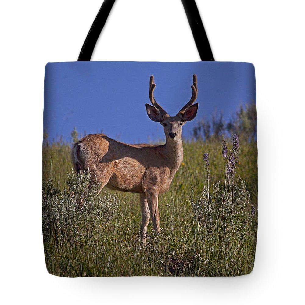 Deer Tote Bag featuring the photograph Mule Deer Buck In Velvet  #2231 by J L Woody Wooden