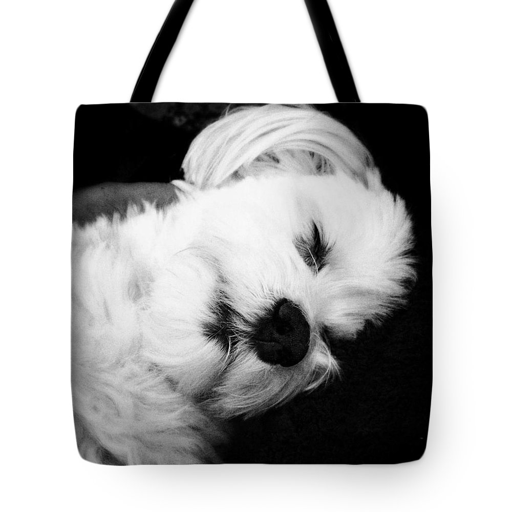 Dog Tote Bag featuring the photograph Nighty Night by Natasha Marco