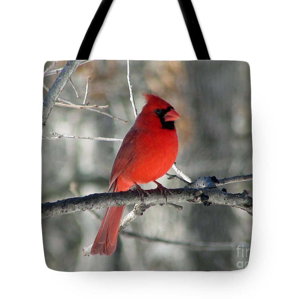 Cardinal Tote Bag featuring the photograph Northern Cardinal 2 by Jamie Smith
