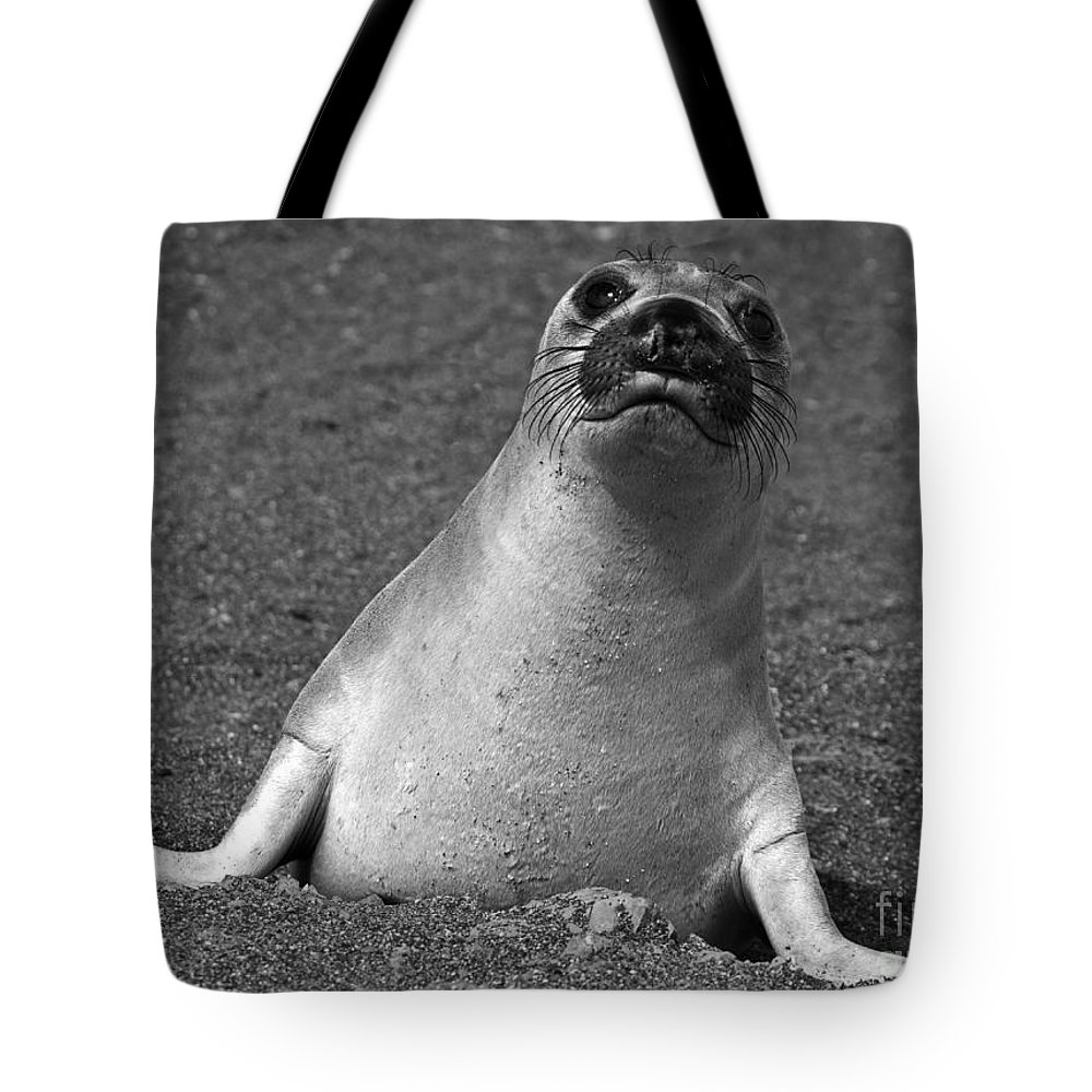Mirounga Angustirostris Tote Bag featuring the photograph Northern Elephant Seal Weaner by Liz Leyden