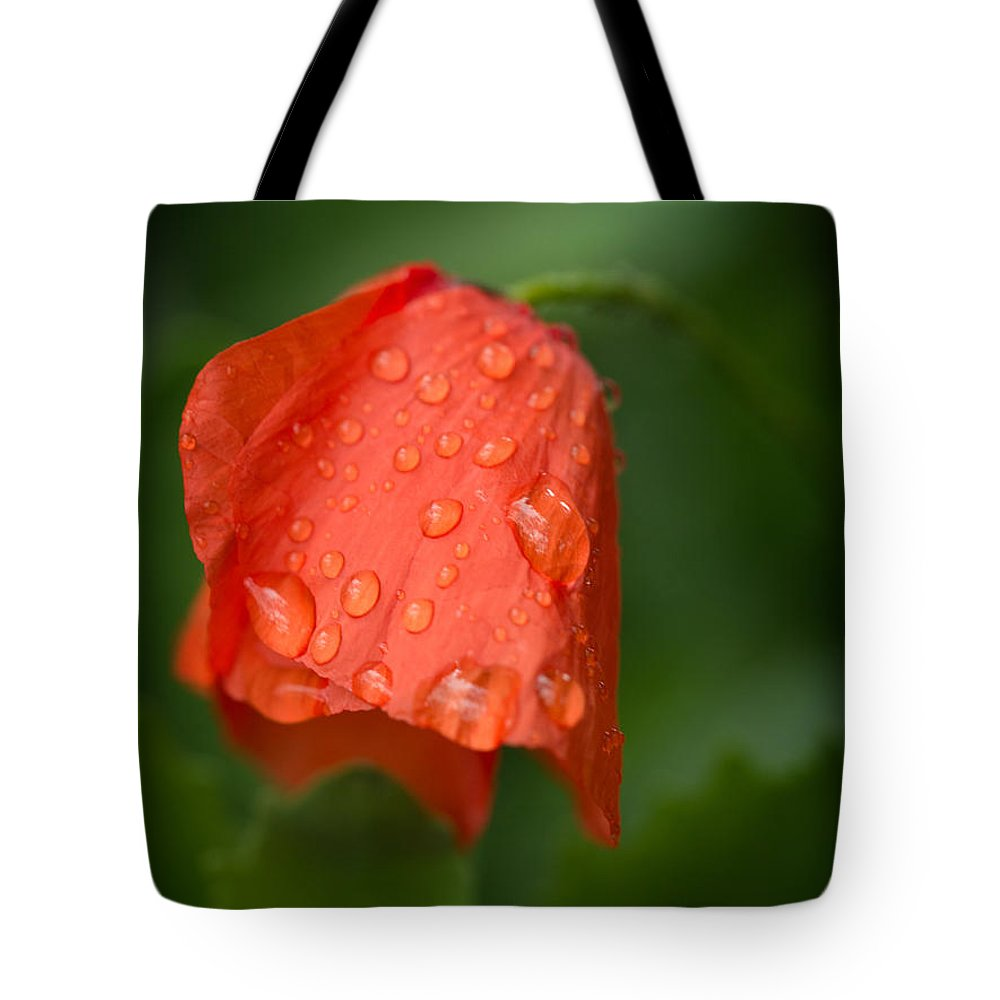 Orange Tulip Tote Bag featuring the photograph Orange Tulip by Brothers Beerens