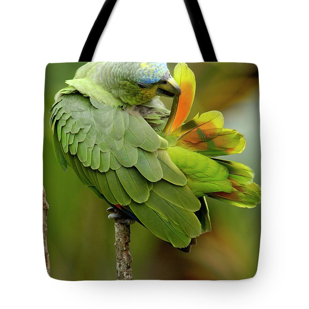 00217468 Tote Bag featuring the photograph Orange-winged Parrot Amazona Amazonica by Pete Oxford