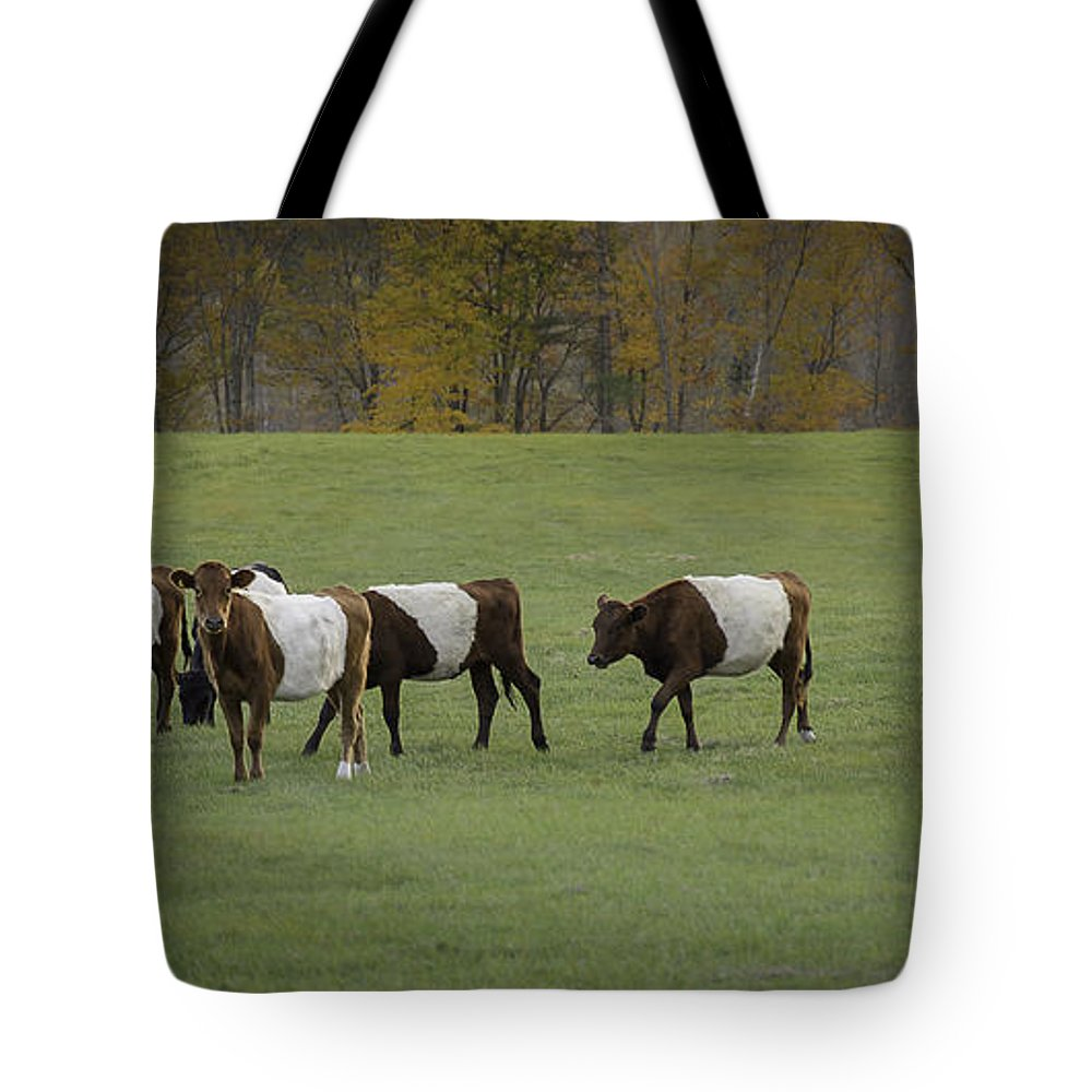 Cows Tote Bag featuring the photograph Oreo Cows by Lisa Bryant