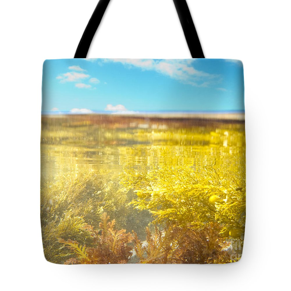 Above Tote Bag featuring the photograph Over-under Split Shot Of Clear Water In Tidal Pool by Stephan Pietzko