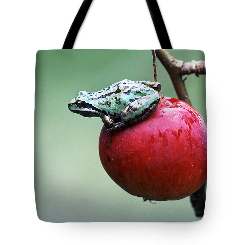 Bright Tote Bag featuring the photograph Pacific Tree Frog On A Crab Apple by David Nunuk