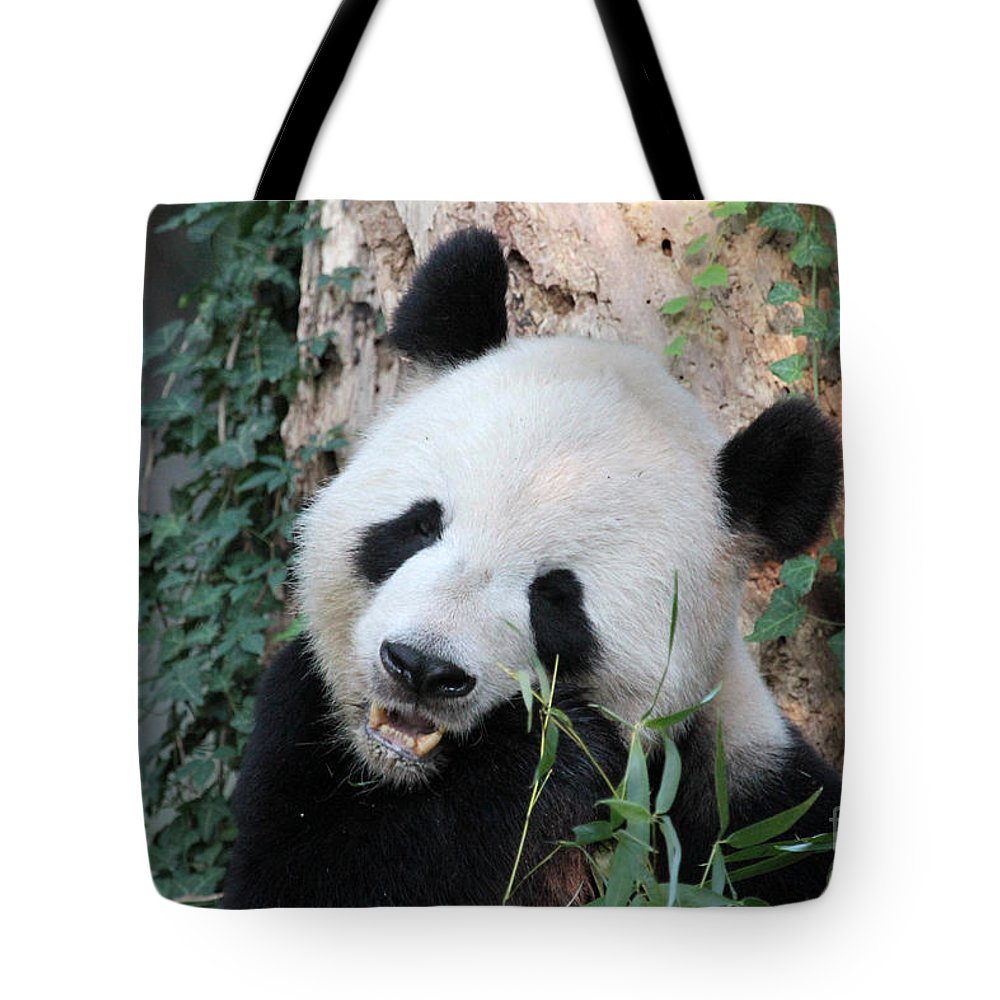 Panda. Eating Tote Bag featuring the photograph Panda Eating by Dwight Cook