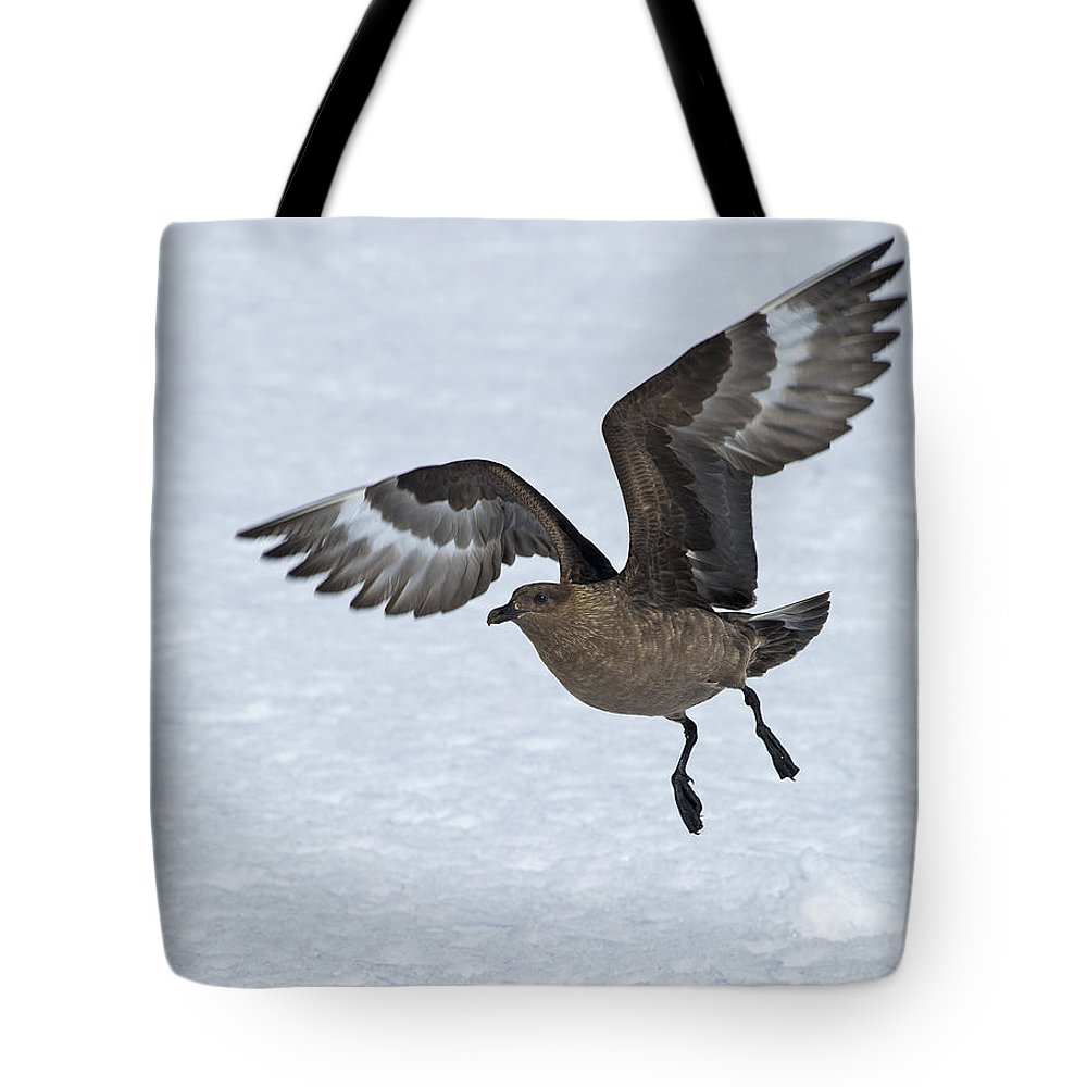 Festblues Tote Bag featuring the photograph Patrolling... by Nina Stavlund
