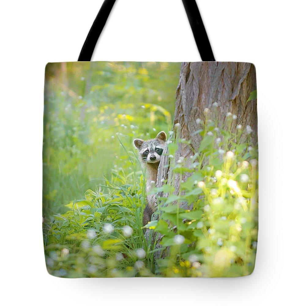 Raccoon Tote Bags